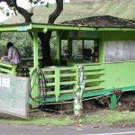 julias-tree-house